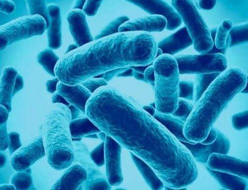 Probióticos, prebióticos y su efecto nutricional
